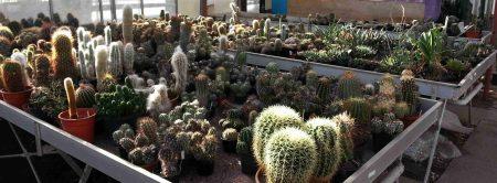 planten van de cactusclub