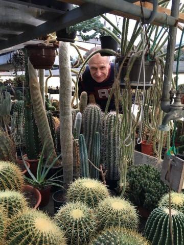 planten uit de verzameling van de cactusclub