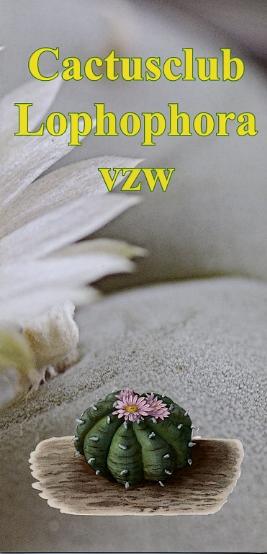 foto flyer cactusclub